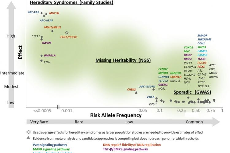 A subset of genetic susceptibility variants for colorectal cancer